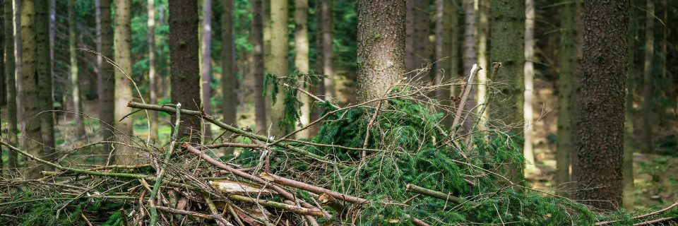 Strengthening the European bio-economy industry by creating novel materials from agricultural and forestry waste