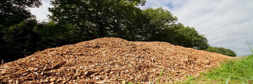 Transforming agroforestry waste into high added-value products